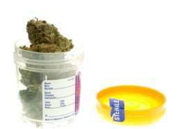 Should Employers in NY Ask Potential Employees for Marijuana Testing?